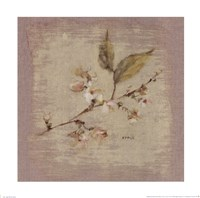 Apple Blossom Square Fine-Art Print