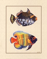 Tropical Fish II Fine-Art Print