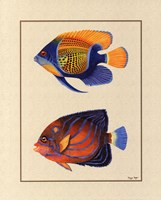 Tropical Fish III Fine-Art Print