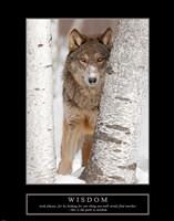 Wisdom - Gray Wolf Fine-Art Print