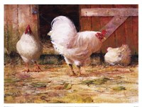 White Leghorns Fine-Art Print