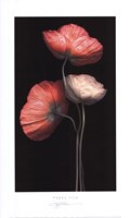 Poppy Trio Fine-Art Print