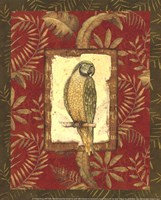 Exotica Parrot Fine-Art Print