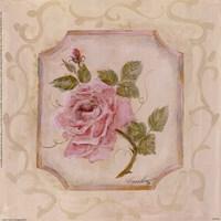 Rose In Season l Fine-Art Print