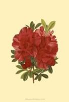 Blooming Azalea I Fine-Art Print