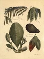 Rainforest Collection I Fine-Art Print