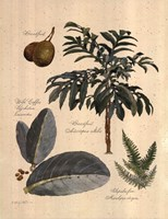Rainforest Collection II Fine-Art Print