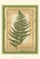 Woodland Scrapbook II Fine-Art Print