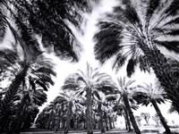 Spinning Palms Fine-Art Print
