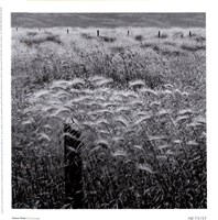 Fence Posts Fine-Art Print
