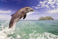 Dolphin Leaping Fine-Art Print