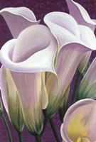 Purple Lillies Fine-Art Print