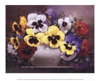 Rainbow of Pansies Fine-Art Print