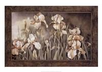 Field of Irises Fine-Art Print