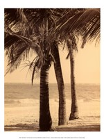 Palm Beach II Fine-Art Print
