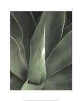 Tropica III Fine-Art Print
