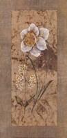 Antique Daffodil Fine-Art Print