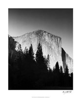 El Capitan In Trees Giclee