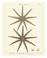 Striking Starfish III Giclee