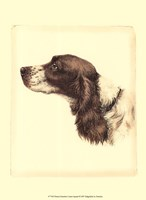 Printed Danchin Cocker Spaniel Fine-Art Print