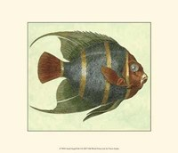 Small Angel Fish I Fine-Art Print