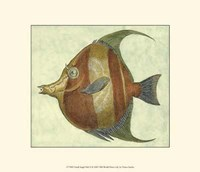 Small Angel Fish II Fine-Art Print