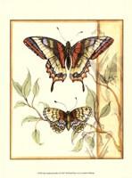Mini Tandem Butterflies II Fine-Art Print