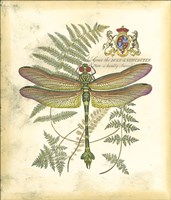 Mini Regal Dragonfly III Fine-Art Print
