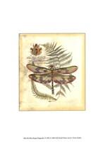 Mini Regal Dragonfly IV Fine-Art Print