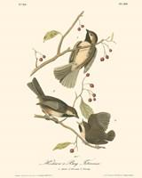 Hudson's Bay Titmouse Fine-Art Print