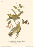 Black-Throated Green Wood Warbler Fine-Art Print