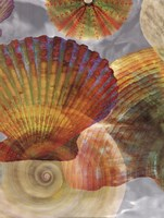 Shell Suite II Fine-Art Print