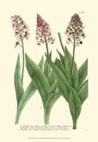 Lilac Blooms II Fine-Art Print