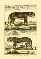 Panther and Leopard Fine-Art Print