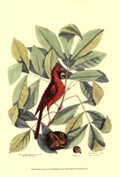 Red Bird and Hiccory Tree Fine-Art Print