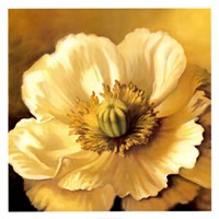 Poppy Portrait Fine-Art Print