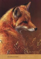Curious Red Fox Fine-Art Print