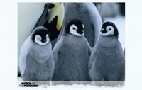 March of the Penguins Baby Penguins Fine-Art Print