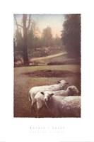 Ruthie's Sheep Fine-Art Print
