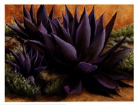 Purple Agaves On The Rocks Fine-Art Print