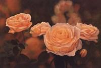 Mandarin Heirloom Roses Fine-Art Print