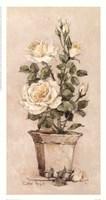 Shades Of Roses ll Fine-Art Print