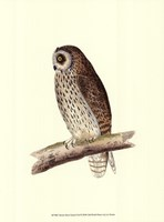 Short Eared Owl Fine-Art Print