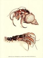 Hermit Crabs I Fine-Art Print
