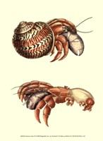 Hermit Crabs II Fine-Art Print