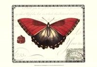 Butterfly Prose I Fine-Art Print