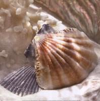 Coral Shell III Fine-Art Print
