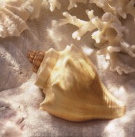 Coral Shell IV Fine-Art Print