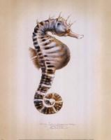 Potbelly Seahorse Fine-Art Print