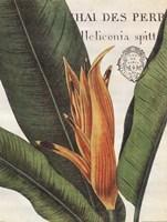 Botanique Tropicale II Fine-Art Print